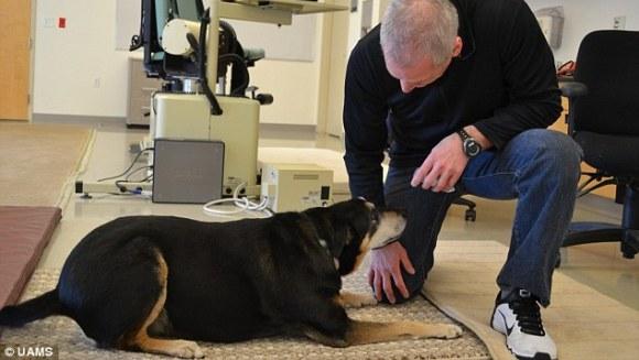 Un câine poate detecta cancerul în urina umană