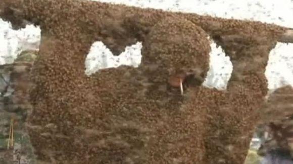 Apicultor de Cartea Recordurilor: s-a lăsat acoperit de 1 milion de albine, în timp ce trăgea dintr-o țigară – VIDEO
