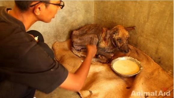 De la moarte la viaţă – surprinzătoarea transformare a unui câine fără adăpost