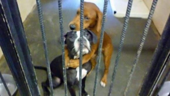 Îmbrăţişarea care le-a salvat viaţa. Au scăpat de eutanasiere datorită imaginii
