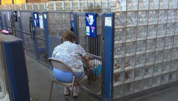 Motivul emoționant pentru care o femeie le citește povești câinilor din adăposturi