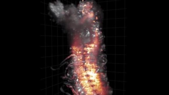 Imaginile incredibile care arată cum funcţionează sistemul nervos central al unei muşte