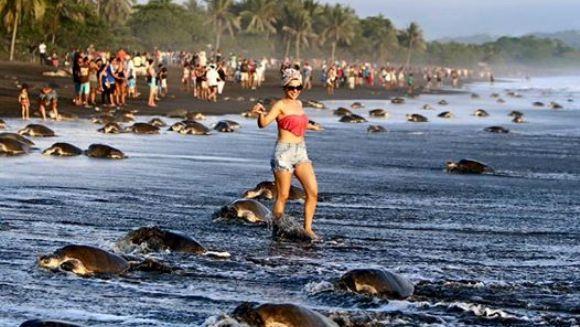 Revoltător: ce au făcut niște turiști pe o plajă în care sute de broaște depun ouă
