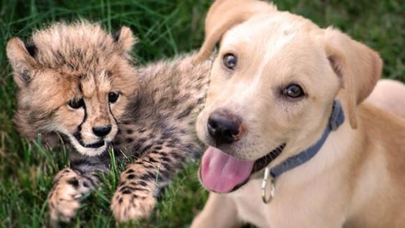 Prietenie de poveste între un pui de leopard și un cățeluș