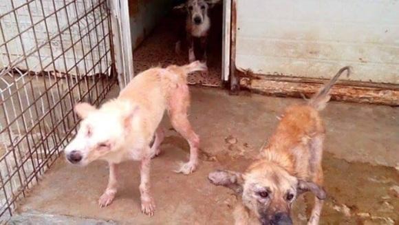650 de câini ai străzii, din România, salvați de un actor internațional - Galerie Foto