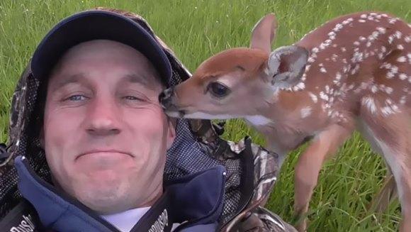 Un pui de căprioară refuză să plece de lângă omul care i-a salvat viața