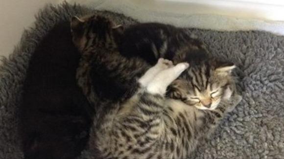 O pisică a încercat să se furişeze în cabinetul medicului veterinar. Motivul îţi va topi inima