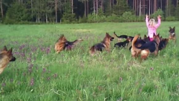 Când 14 câini din rasa Ciobănesc German înconjoară  o fetiță de 5 ani, apare un clip pe care trebuie să îl vadă lumea întreagă – VIDEO