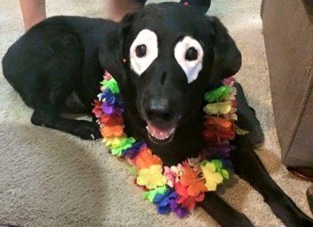 Câine cu boală ciudată, trecut și mai ciudat