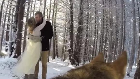 Şi-au lăsat câinii să îi filmeze în ziua nunţii şi a ieşit un clip de milioane – VIDEO