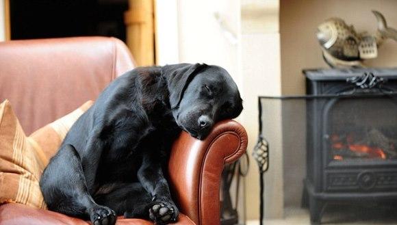 Cafeneaua care îşi deschide în fiecare noapte uşile pentru câinii fără adăpost