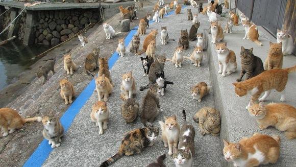Pisicile de pe Insula Pisicilor au primit prea multă mâncare de la internauţi