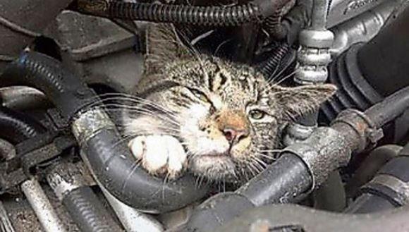 A supravieţuit în mod miraculos, după ce a călătorit peste 30 de km sub capota unei maşini