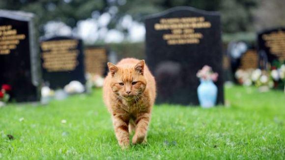 A murit una dintre cele mai populare pisici din lume. Despre cine este vorba