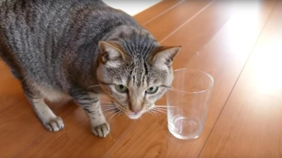 Cum poți afla dacă pisica ta este stângace sau dreptace - VIDEO