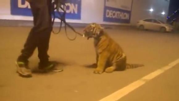 Un rus de la un circ a plecat la plimbare cu un pui de tigru, într-un centru comercial – VIDEO