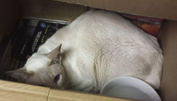 O pisică a supraviețuit 8 zile într-un colet poștal în care a ajuns din greșeală – VIDEO