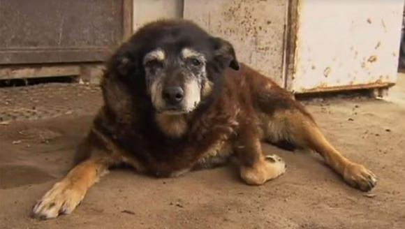 A murit cel mai bătrân câine din lume