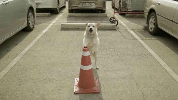 A hrănit un câine al străzii, iar apoi... Probabil cea mai tare reclamă în care apare un patruped canin – VIDEO emoționant