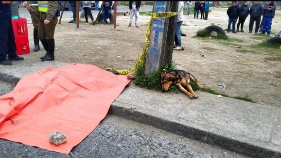 Un câine loial plânge moartea stăpânului său, ucis într-un accident rutier. Imaginea a frânt inimile oamenilor