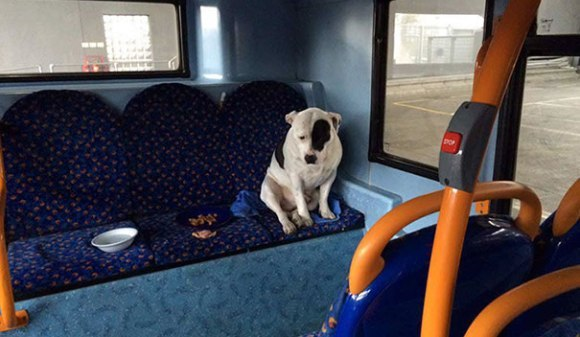 Impresionant: câine abandonat în autobuz, reunit cu familia lui