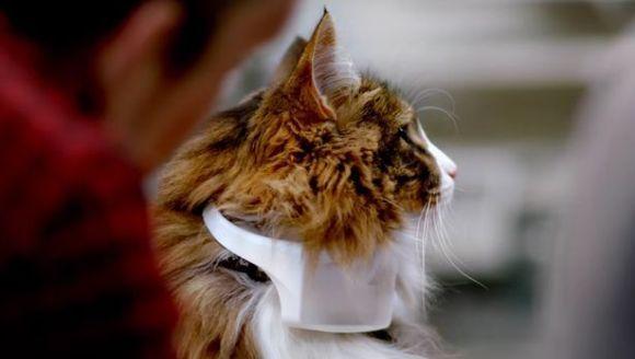 A fost creată zgarda care poate descifra și traduce limbajul pisicilor