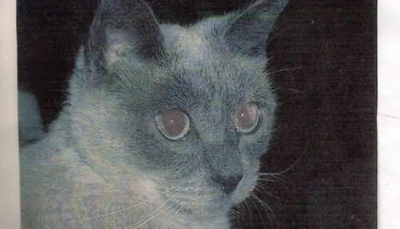 Cea mai bătrână pisică din lume a murit la scurt timp după ce a intrat în Cartea Recordurilor