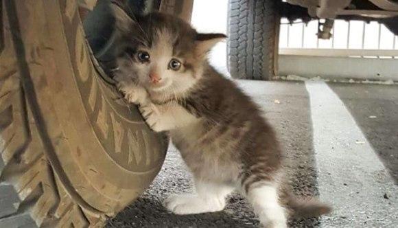A găsit o pisicuță speriată sub mașină și nu a putut să o lase de izbeliște – Foto