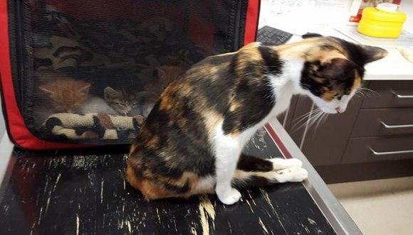 Povestea incredibilă a pisicii paralizate, care s-a târât până la locul în care și-a văzut ultima data puii