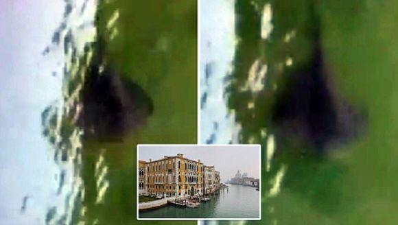 O creatură misterioasă creează panică în Veneția, după ce a fost filmată înotând în apele unui canal