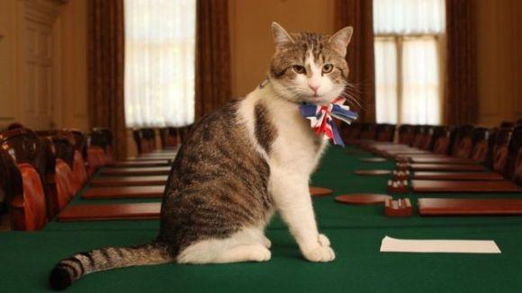 S-a decis: motanul Larry nu va fi evacuat din reşedinţa prim-ministrului britanic