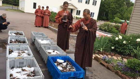 Mai mulți călugări au cumpărat sute de homari, salvându-i de la moarte