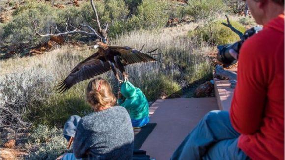 Momentul înfricoșător în care un vultur a încercat să zboare cu un copil în gheare
