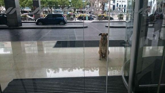 O însoţitoare de zbor a adoptat un câine al străzii care a aşteptat-o şase luni în faţa hotelului ei din Buenos Aires - Galerie Foto