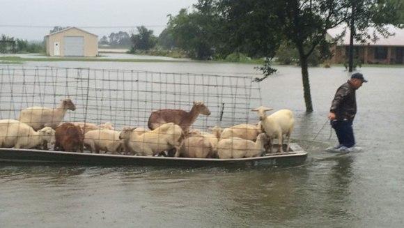 Imagini emoționante, după ploile de proporții din Louisiana. Oamenii refuză să își părăsească animalele - Galerie Foto