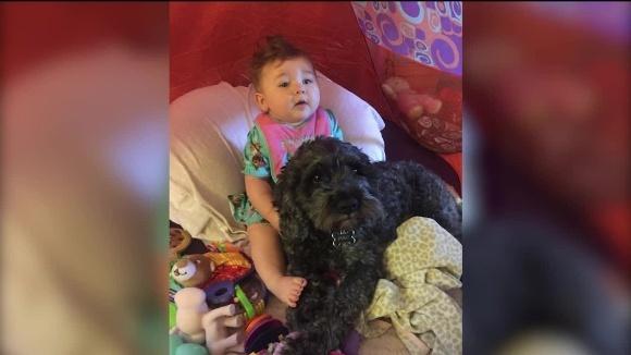 Și-a dat viața pentru ea: o fetiță de opt luni a fost salvată dintr-un incediu de câinele ei, care a acoperit-o cu trupul lui -VIDEO