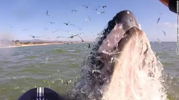 Întâlnire surpinzătoare a unui flautist cu o balenă cu cocoașă – VIDEO