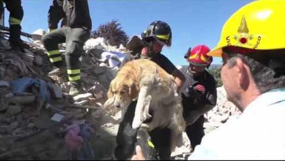 Un câine a fost scos în viaţă de sub dărâmături, la 10 zile după cutremurul din Amatrice