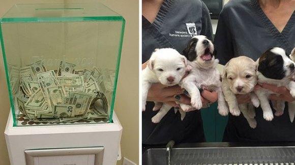 O persoană anonimă a pus 8000 de dolari într-o cutie de donaţii dintr-un adăpost de animale
