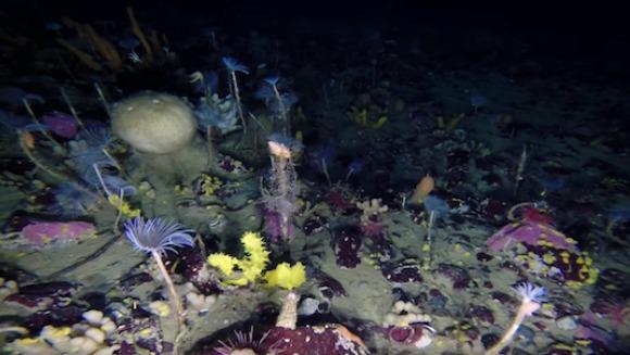 Un robot subacvatic a mers sub Antarctica şi a înregistrat imagini uimitoare ale culorilor explozive- VIDEO