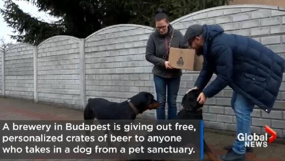 O nouă campanie: Adoptă un câine și primești o ladă cu bere personalizată