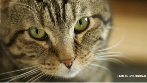 S-a dovedit ştiinţific! Contrar credinţei populare, pisicile sunt mai bune decât câinii în operaţiuni de salvare