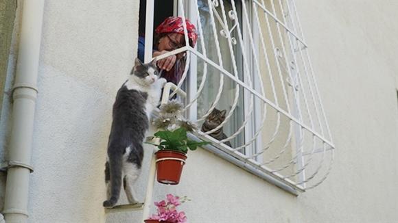 O femeie a construit o scară până la fereastra casei sale, pentru ca mâţele străzii să poată urca la ea în casă - Galerie foto