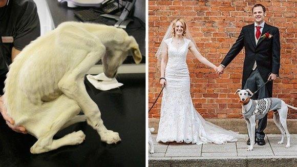 Impresionant: cel mai slab câine din lume cântărea doar 3 kilograme. După un an s-a recuperat şi îşi conduce părinţii la altar - Galerie foto