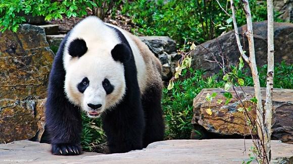 Jumătate dintre speciile existente vor fi extincte la sfârşitul secolului