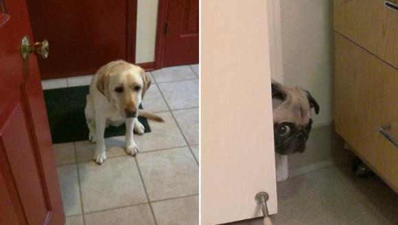 Privirea de vinovat a câinelui este percepută greşit. Ce vrea să transmită, de fapt, acesta