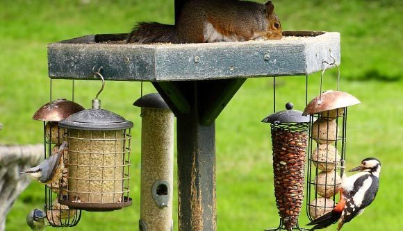 Prezenţa păsărilor şi a copacilor în jurul casei pot ajuta la combaterea stresului