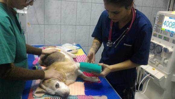 Veste bună pentru stăpânii de animale din România- necuvântătoarele pot face dializă