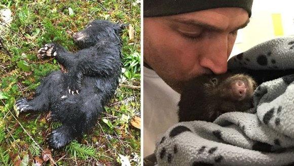 A riscat pedeapsa cu închisoarea, pentru a salva un pui de urs care era pe moarte - Galerie foto
