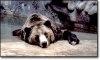 De ce hiberneaza unele animale salbatice?